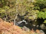 A Lakeland Beck at Grasmere