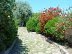 Flowers and mediterranean bushes in the private garden