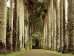 Palm avenue in vicinity