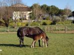Cavalli liberi nei paddok