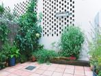 Back courtyard with some Tulsi an Ayurvedic herb for energy