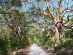 Walk along bush walks or drive to Boranup Forest - spectacular!