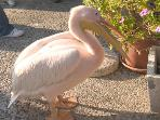 A fearless Paphos harbour resident