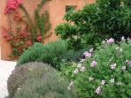 Walled herb garden