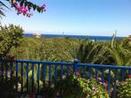 The view from the front balcony, over the lemon, orange and olive trees.