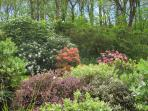 The garden in Spring