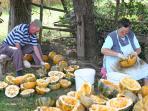 Prekmurje is well known for its pumpkin seed oil