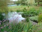 Natural fish pond