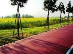 pista ciclabile tra i campi di girasoli