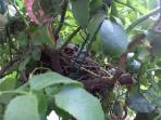 Tra le rose, un nido
