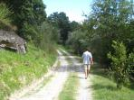 Our property is full of paths for walking and hiking