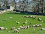 Yorkshire Dales scene