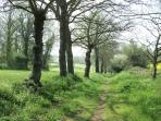 Wood-land walks nearby