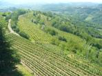 Vin yards of Goriska Brda