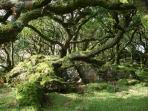 Ancient woodlands - this is Ty Canol Wood home to thousands of lichens