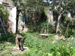 giardino recintato ( 8o cm ) per cane ( se richiesto )