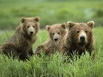 Belitza Bear Park