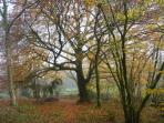 The old beech tree down in the valley