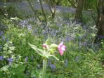Walk on the coastal path around the Lizard in early May, to see the wild bluebells.