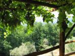 View through pergola to olive trees and woods beyond