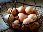 Free range eggs - produce at Stronchullin