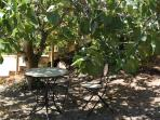 Shady spot under fig tree
