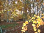 Autumn Leaves In Nearby Woods