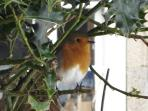 December robin at Lee