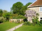 wisteria by the path to Tudor Lee