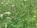 Walking and wild flowers in Les Coches