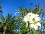 Enjoy the tropical gardens, float the fallen Frangipani flowers each day in a garden bowl