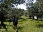 The olive groves in Spring infront of Villa Daymer