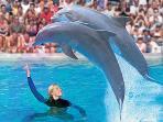 Zoo Marine Sea Life Centre 20 min drive from Apartment
