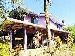 Gecko House - Pure Jungle