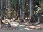 short (300m) walk through pine and eucalyptus forest takes you to the beach