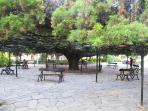 Nearby Garden (Príncipe Real)