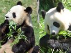 ZooParc de Beauval à seulement 30 minutes
