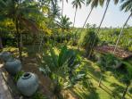 Kumara's lower garden