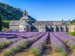 Abbaye de Sénanque ( à 15 km )