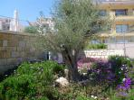 olive trees and garden at the resort