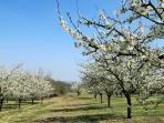 View of Orchards