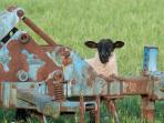 Fun on the farm.  Animals are always a joy to watch.