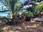 The garden with a fantastic sea backdrop.