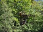 Aperçu cabane perchée Guadeloupe (15m)