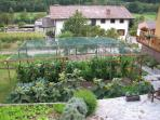 Our colourful garden with vegetables and herbs.