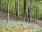 Fabulous woodland walk near Chipping Campden