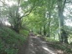 A beautiful avenue of beech trees near the cottages.