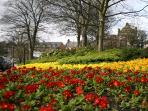 Harrogate in Bloom!