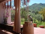 Veranda and surroundings
