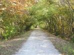 Historic Katy Trail in the backyard